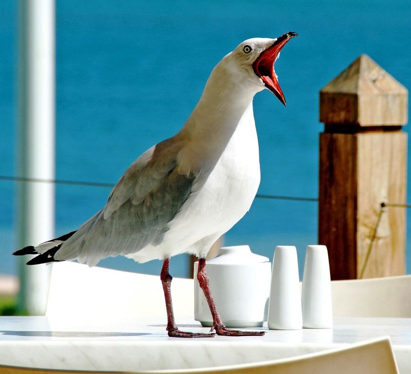 seagull-1209875