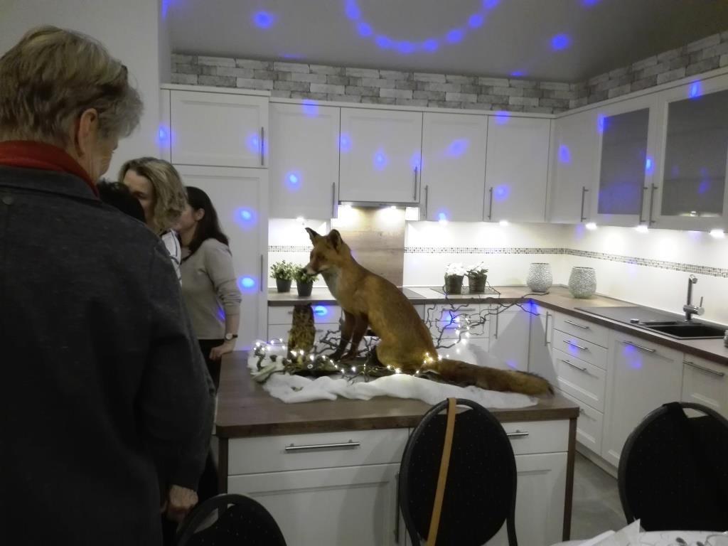 Vorsichtige Ännhäherung an Fuchs und Eule