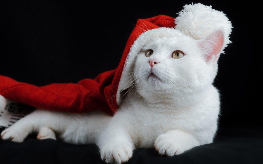 Alle Jahre wieder – Weihnachten kommt plötzlich